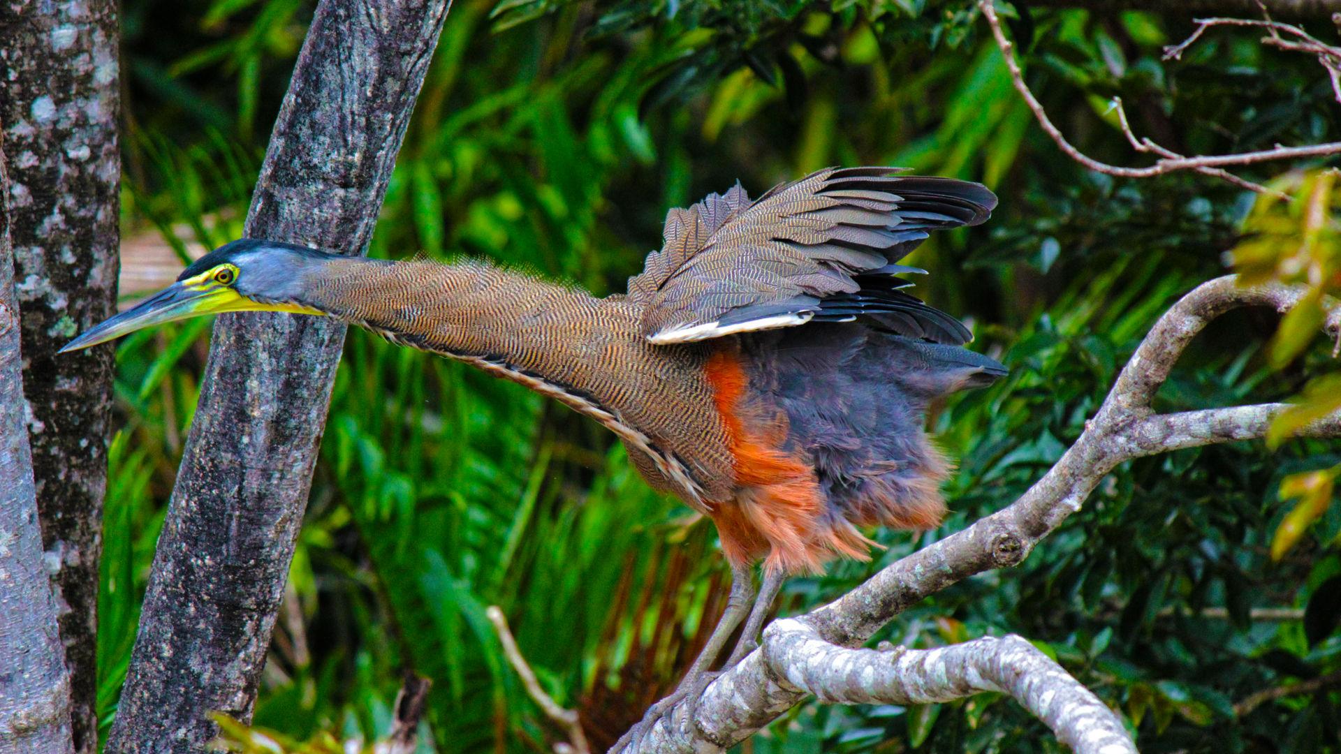 Bird at Carrara National Park