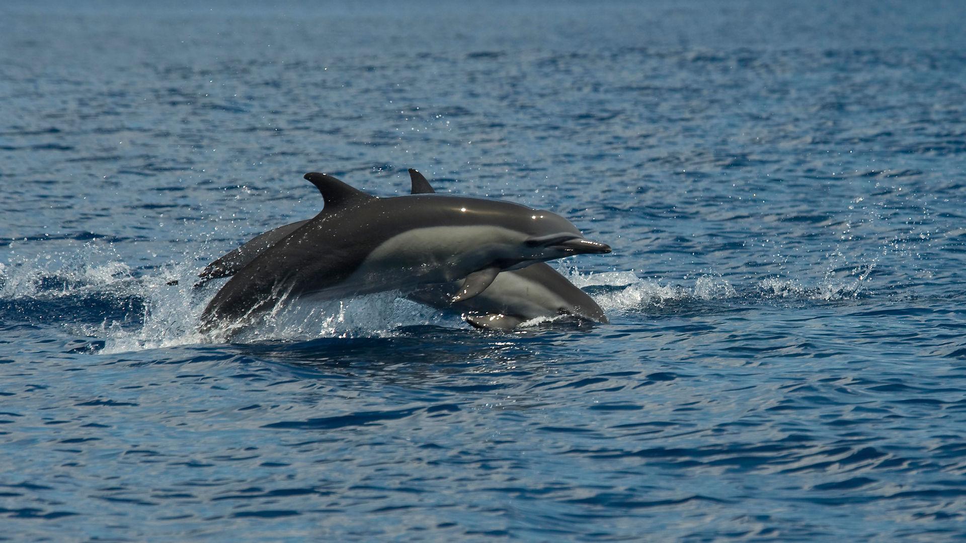 Dolfins at Marina Ballena National Park