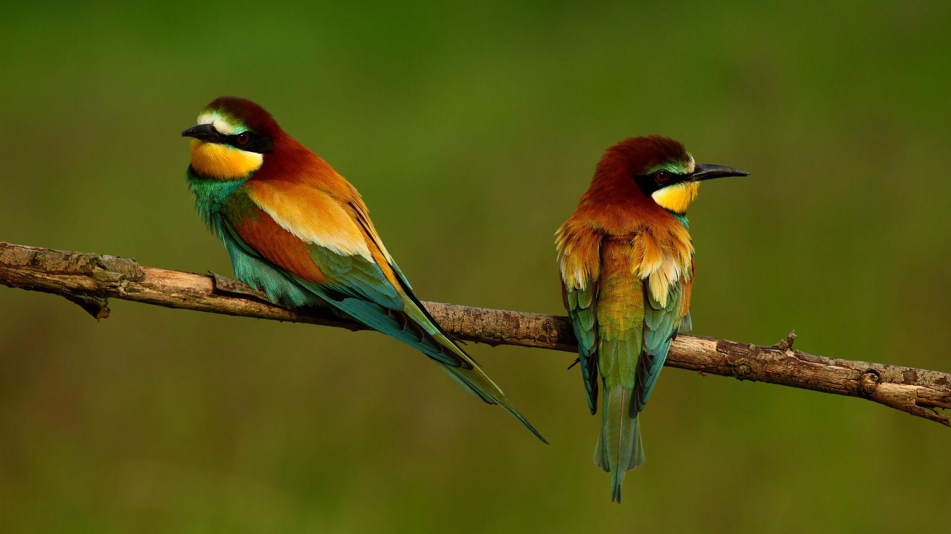 Birds at Manuel Antonio National Park
