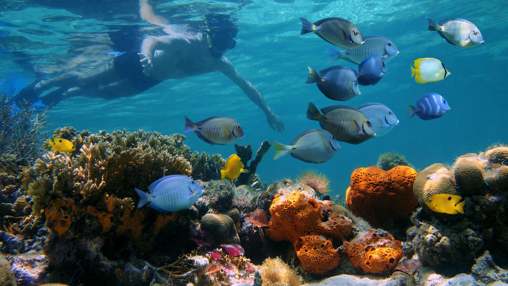 Snorkeling in Isla Tortuga
