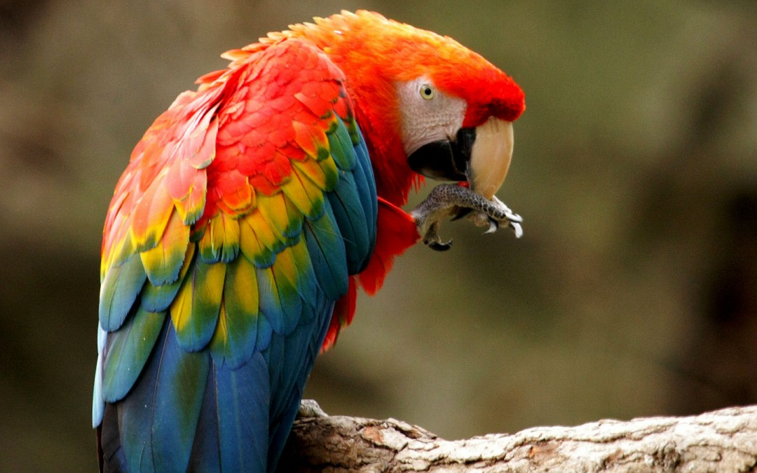 Macaw in Zoo Ave park