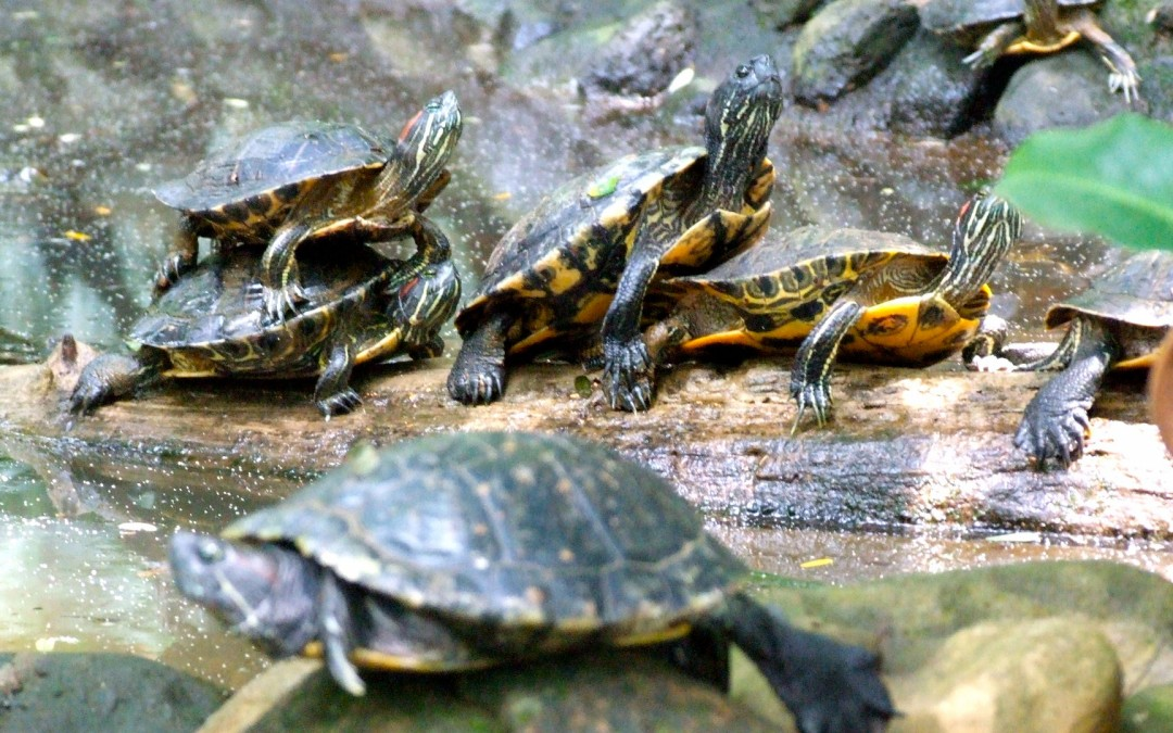 Turtles in Zoo Ave park
