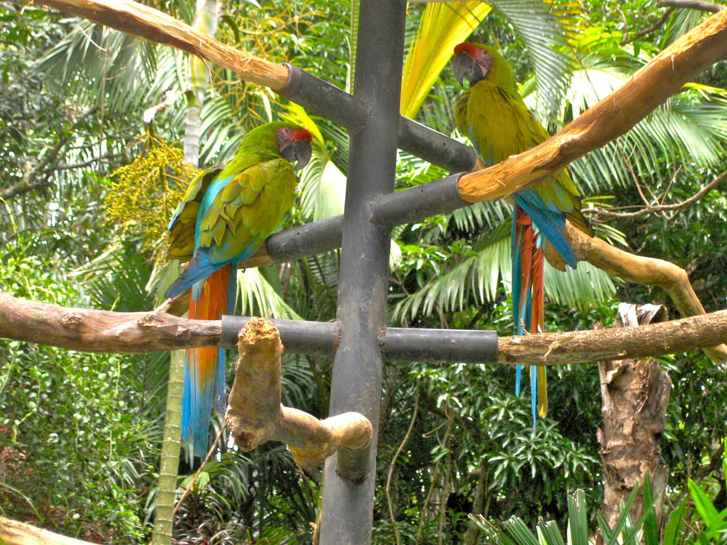 Macaws in Zoo Ave park