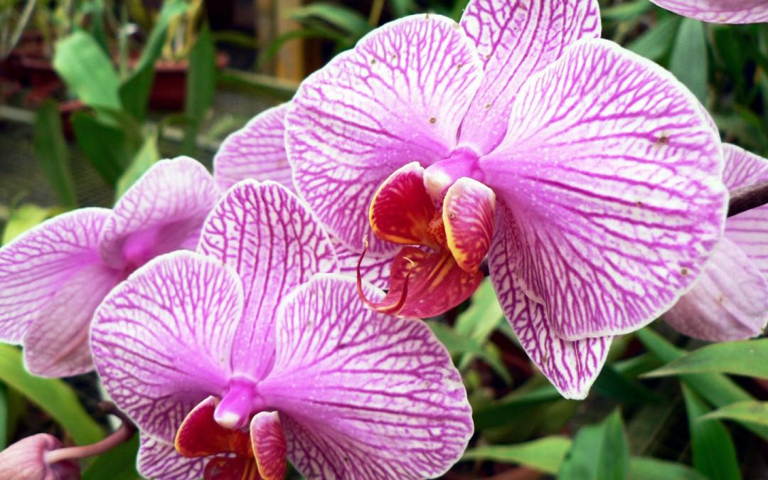Jardin d'orchidées Lankester