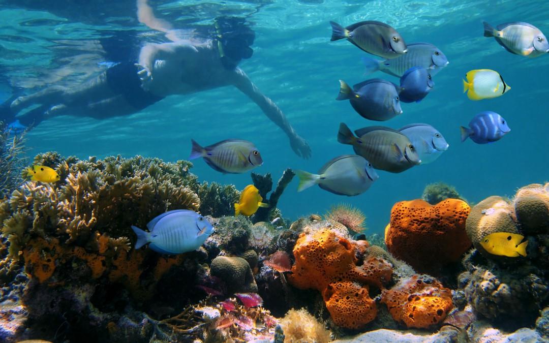 Insel Tortuga